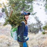 Calamity Jane Juniper Harvest